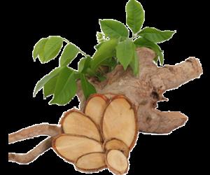 Benefits Of Tongkat Ali Root Extract