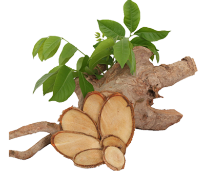 Benefits Of Tongkat Ali Root Extract
